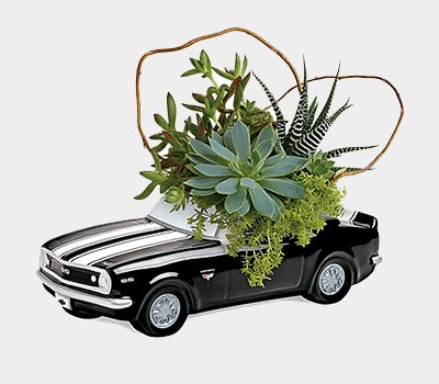 Vintage Car with Succulents
